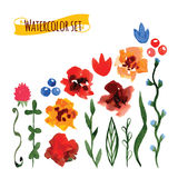 Set of handpainted watercolor vector flowers and leave Royalty Free Stock Photo