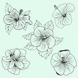 Set of Hawaii hibiscus flowers, leaves. Set of Hawaii hibiscus flower, leaf for Coloring book page for adult. Can use for wedding invitation card, ticket Royalty Free Stock Photos