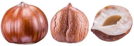 Set hazelnuts lub filberts Ścinek ścieżka zdjęcie stock