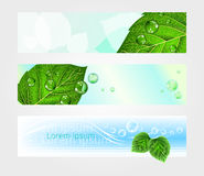 Set of headers for website with foliage, vector. Eps 10 royalty free illustration