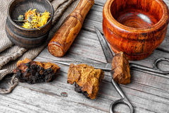 Set of healing herbs Royalty Free Stock Photography