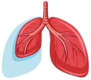 Set of healthy lungs. Illustration royalty free illustration