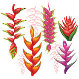 Set of Heliconia flowers Stock Images