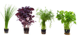 Set with herbs Stock Image