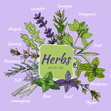 Set of herbs for food and cosmetic. Royalty Free Stock Images