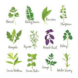 Set of herbs 2 isolated. Vector illustration Royalty Free Stock Photography