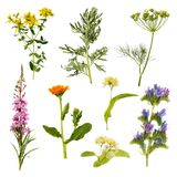 Set of herbs isolated on white background stock photography