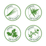 Set of herbs labels. 100 organic. Vector illustration. Set of herbs labels. 100 organic. Greenery collection. Savory, lovage, chives, chervil. Vector stock illustration