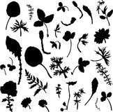 Set of herbs and leaves silhouette s Royalty Free Stock Photos