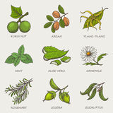 Set of herbs and plants hand drawn icons that are used in cosmetics and natural medicine. Royalty Free Stock Photos
