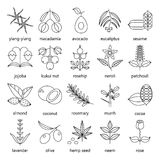 Set of herbs and plants outline icons used in cosmetics and natural medicine. Royalty Free Stock Image
