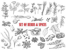 Set of Herbs and spices in sketch style. Vector illustration for your design Royalty Free Stock Images