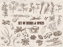 Set of Herbs and spices in sketch style Royalty Free Stock Images