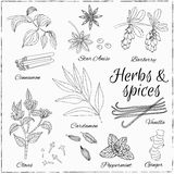 Set with Herbs and Spices. Royalty Free Stock Image
