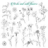 Set of herbs and wild flowers. Vector illustration for your design Royalty Free Illustration