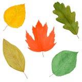 Set herbstliche Blätter, Aquarell gezeichnet, getrennt Stockfoto