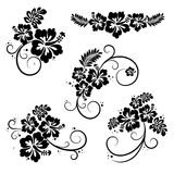 Set of hibiscus flourish decorative design elements. Collection of five flourish hibiscus decorative design elements Stock Photo