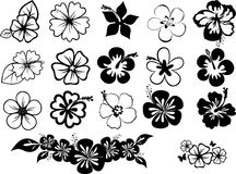 Set of hibiscuses. Set of black and white hibiscus silhouettes Royalty Free Stock Photo