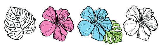 Set of hibiscuses and palm leaf. Set of flower hibiscus isolated on white vector illustration Royalty Free Stock Photography