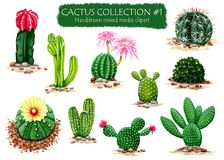 Set of High Quality Hand drawn Cactus Plants Clipart for multiple design projects. This excellent collection of hand drawn cactus plants in all kinds of colors Royalty Free Stock Photo