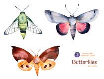 Set of high quality hand painted watercolor Butterflies and moths. Royalty Free Stock Image