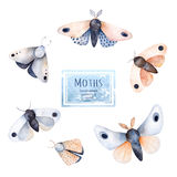 Set of high quality hand painted watercolor Butterflies and moths. Stock Images