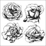 Set of highly detailed hand-drawn roses. Stock Photos