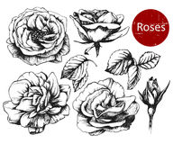 Set of highly detailed hand drawn roses. Stock Photo