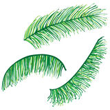 Set of highly detailed palm leaves Royalty Free Stock Images