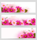 Set of holiday banners with colorful flowers. Stock Photography