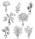 Set of home flowers in pots, vector drawing. Fully editable Stock Images