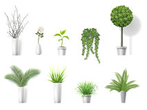 Set home plants Royalty Free Stock Photo
