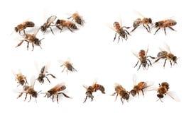Set with honey bees. On white background stock photo