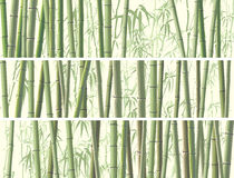 Set of horizontal banner with many bamboos. Stock Photography