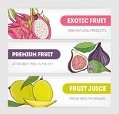 Set of horizontal banners decorated with pitaya or dragon fruit, fig and mango on white background and place for text. Vector illustration for veggie food Royalty Free Stock Photos