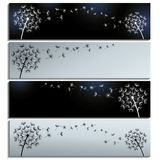 Set of horizontal black and grey banners with dandelions fluff. Isolated over white. Modern floral background with summer or spring flowers. Stylish trendy Royalty Free Stock Photography