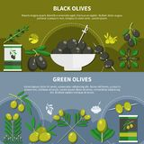 Olives Flat Banners stock illustration