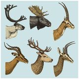 Set of Horn, antlers Animals moose or elk with impala, gazelle and greater kudu, fallow deer reindeer and stag, doe or. Roe deer, axis and dibatag hand drawn Royalty Free Stock Photo