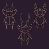 Set of horned beetles in line style. Design elements Royalty Free Stock Photography