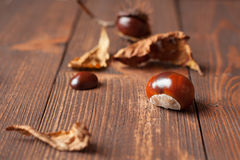 The set of horse chestnuts Stock Photo