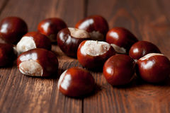 The set of horse chestnuts Royalty Free Stock Images