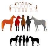 Set of horse group Stock Photo
