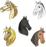 Set horse head Stock Image