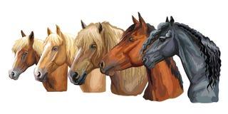 Set of horses breeds 4 royalty free illustration