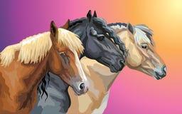 Set of horses breeds 9 vector illustration