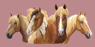 Set of horses breeds 6 vector illustration