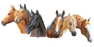 Set of horses breeds2. Set of colorful vector portraits of horses breeds Trakehner horse, Welsh Pony, Appaloosa horse isolated on white background royalty free illustration