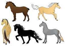 Set of horses - illustration. Set of horses - Normand cob, Palomino, Fjord, Frisian and Irish draft Royalty Free Stock Image