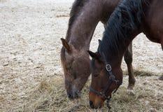 Set of horses Stock Photo