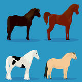 Set of horses Royalty Free Stock Images